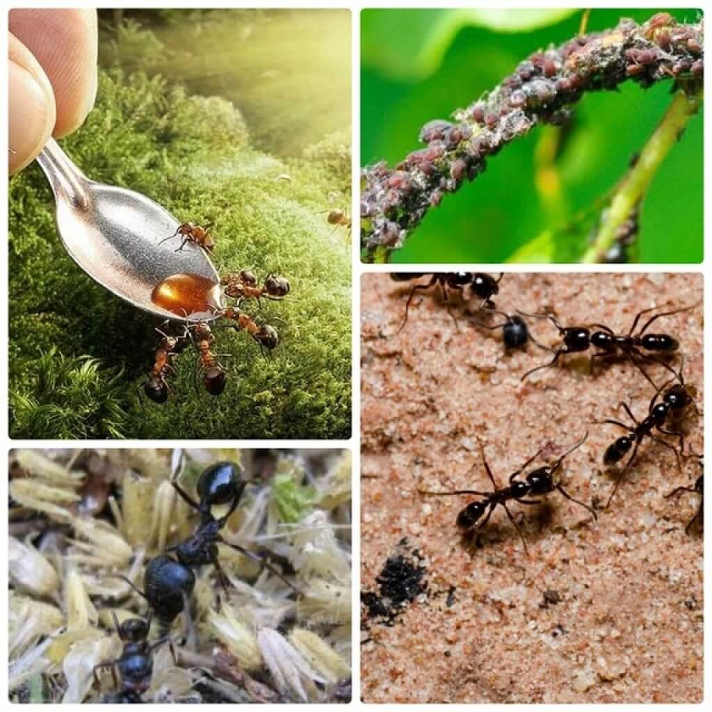 Как вывести муравьев из дома народными средствами 4