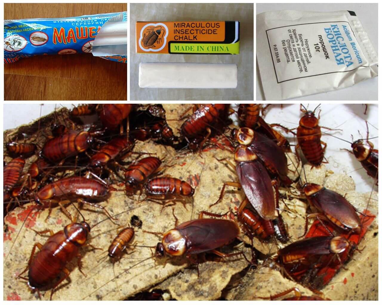 Как вывести тараканов из квартиры навсегда в домашних условиях 30