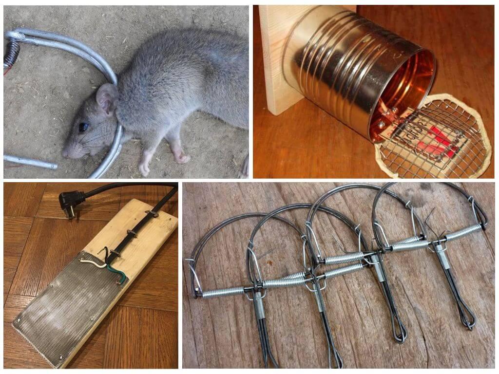 Как сделать ловушку для крысы