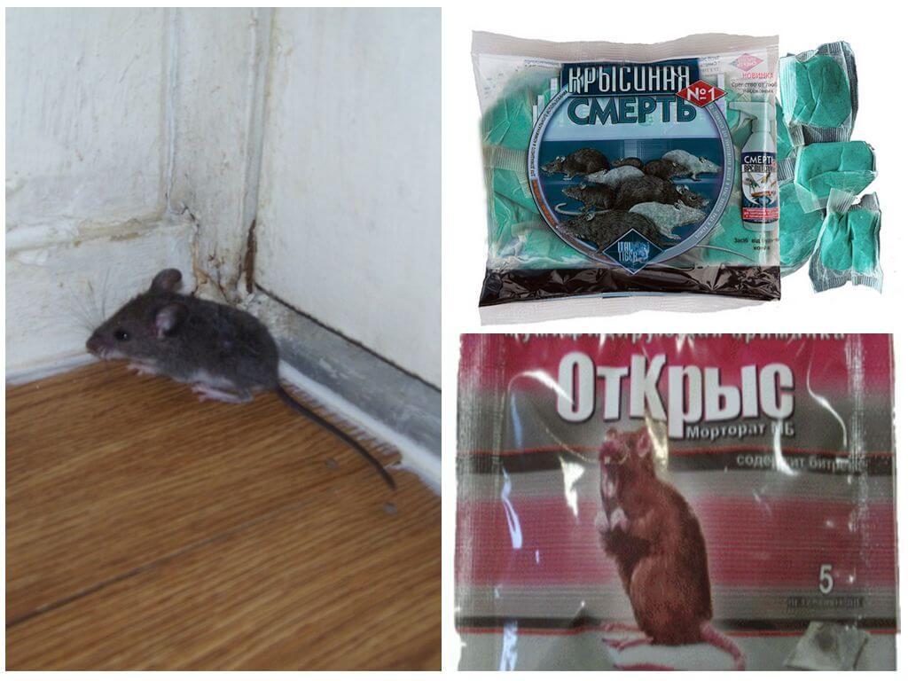 Мыши как сделать отраву для мышей 502