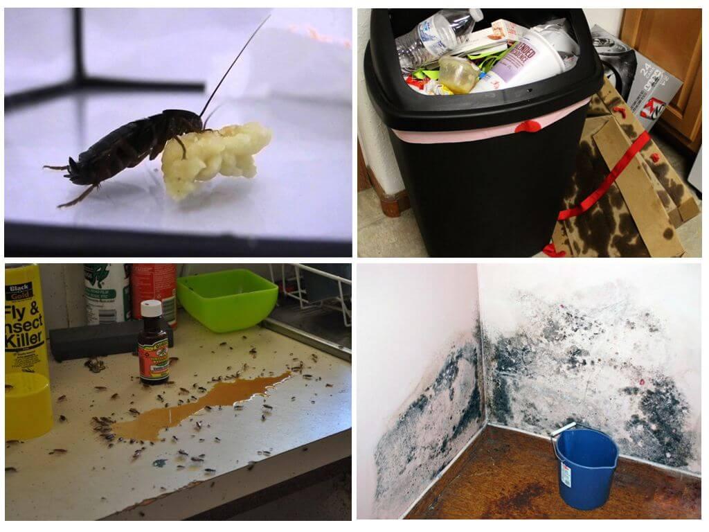 Как избавится от прусаков в домашних условиях 796