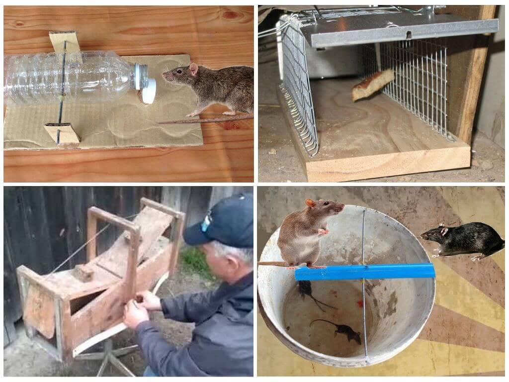 Крысоловку своими руками как сделать - инструкция