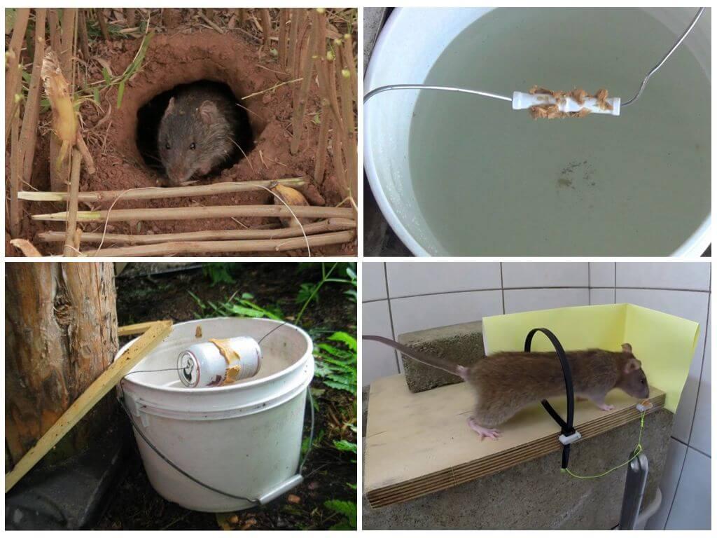 Как сделать ловушку для крысы 132