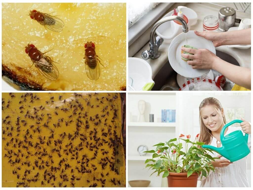 Мошки в кухне как избавиться в домашних условиях 500