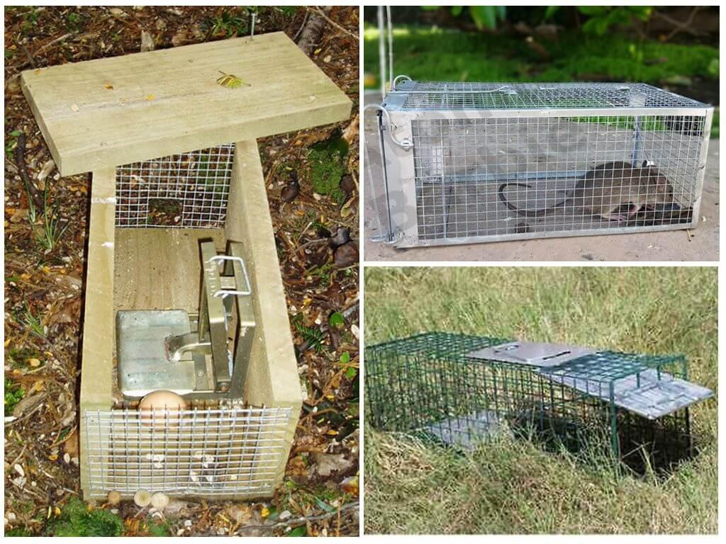 Как сделать ловушку для крысы 54