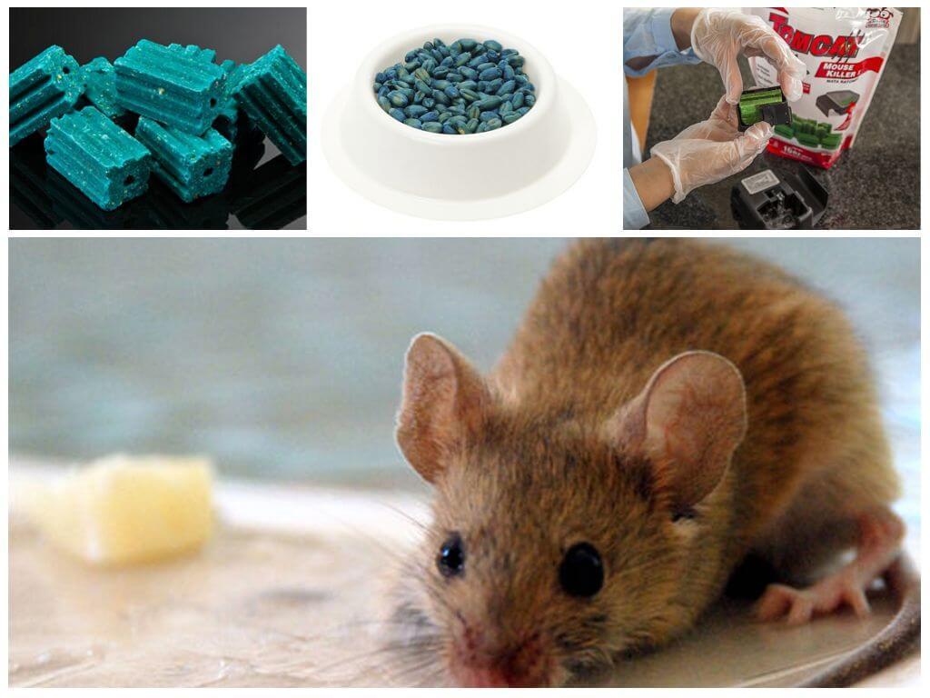 Мыши как сделать отраву для мышей 131