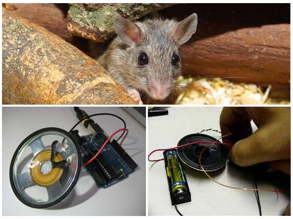 Отпугиватель крыс мышей своими руками