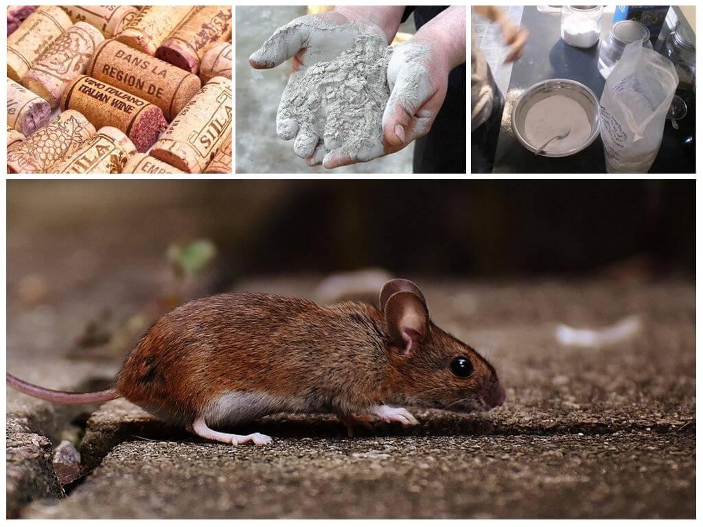 Крысы отрава своими руками 13