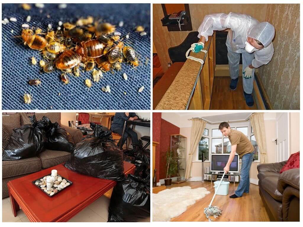 Клопы в квартире их уничтожение в домашних