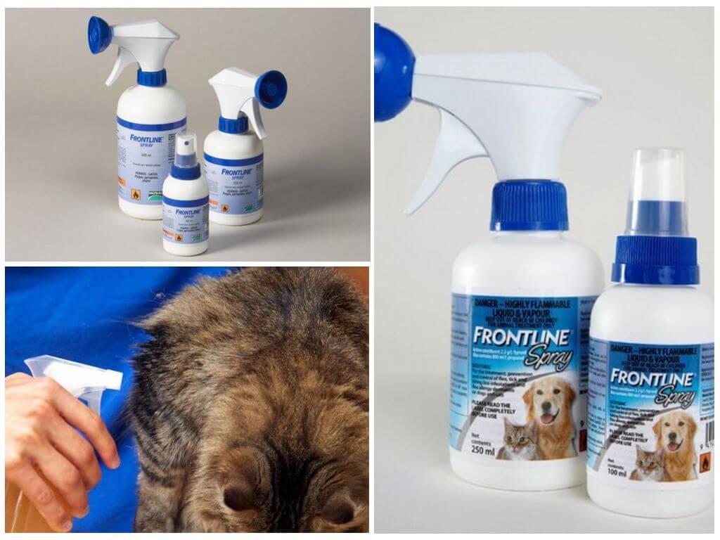 Фронтлайн спрей для беременных кошек 81