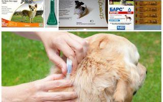 Как избавиться от блох у собаки в домашних условиях народными средствами