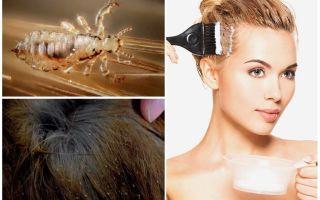 Умрут ли вши, если покрасить волосы