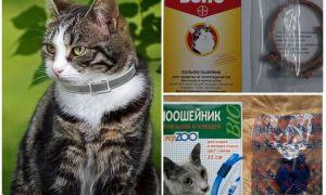 Как избавиться от блох у кошек и котов в домашних условиях