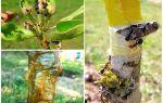 Как бороться с муравьями на деревьях