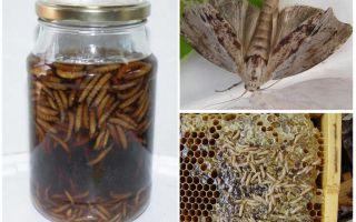 Применение настойки пчелиной моли