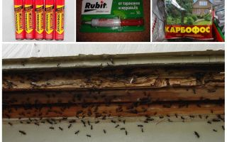 Как вывести муравьев из квартиры в домашних условиях