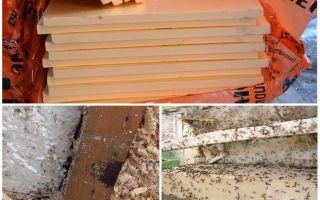 Живут ли муравьи в пеноплексе и пенопласте