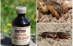 Применение березового дегтя от медведки в саду и огороде