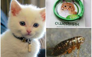 Какие ошейники от блох для котят лучше и с какого возраста их можно одевать