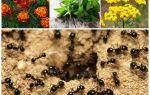 Что боятся муравьи