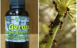 Березовый деготь от муравьев