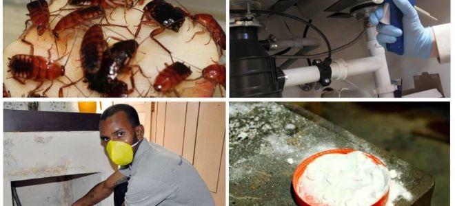 Как можно убить тараканов