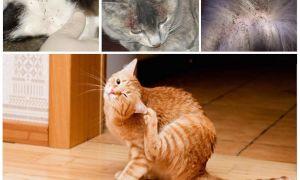 Как выглядят блохи у кошек: фото, симптомы и лечение
