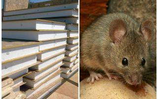 Грызут ли мыши сип панели