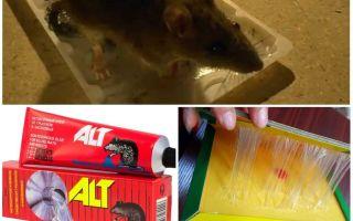 Борьба с крысами в частном доме народными средствами
