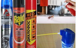 Чем и как травить тараканов в домашних условиях