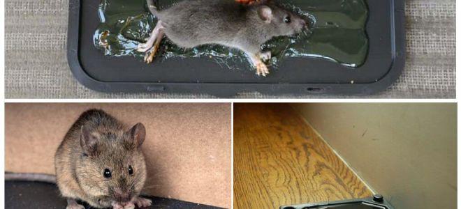 Клей от мышей