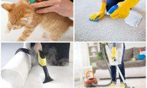 Эффективные средства от блох в квартире или доме
