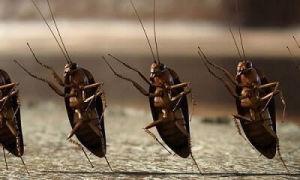 Что означает увидеть таракана во сне? Различные варианты — сонник