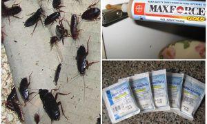 Что делать если от соседей бегут тараканы