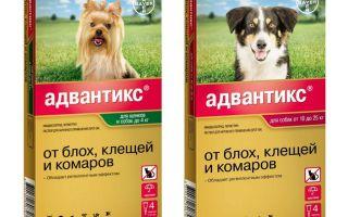 Капли Адвантикс для собак от блох