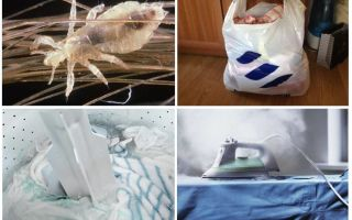 Обработка дома и вещей от вшей и гнид