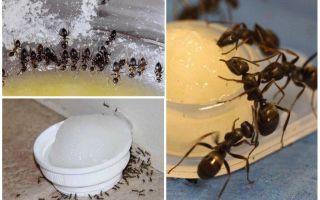 Отрава от муравьев в квартире или доме