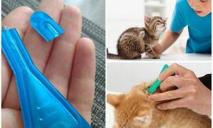 Что будет, если кошка или кот слижет капли от блох