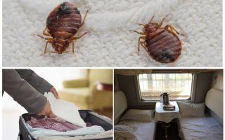 Откуда берутся постельные клопы в квартире