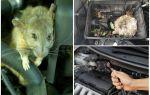 Защита авто от грызунов