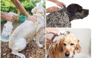 Могут ли блохи от собаки перейти на человека