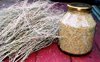 Как использовать от клопов травы пижму и полынь?