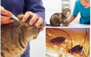 Капли на холку для кошек от блох и глистов