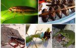 Какие животные питаются тараканами