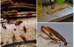 Откуда берутся тараканы в квартире и что делать, если они завелись