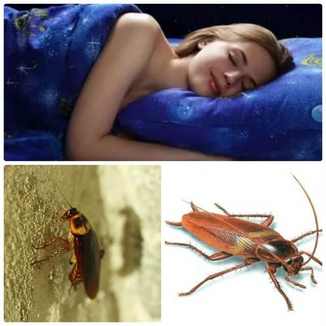 К чему снятся тараканы во сне женщине сонник тараканы