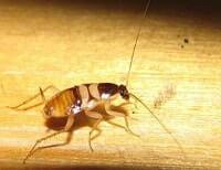 Сон с большими тараканами