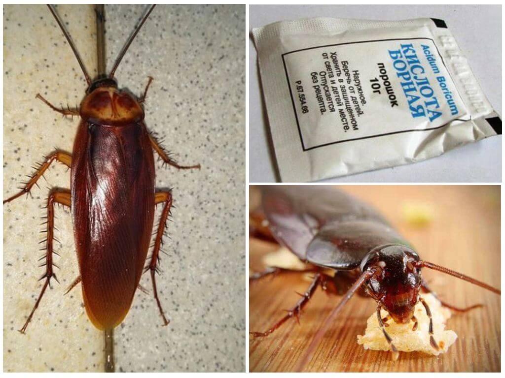 Борная кислота от тараканов