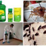 Применение препарата от тараканов Цифок