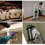 Служба дезинсекции уничтожает тараканов